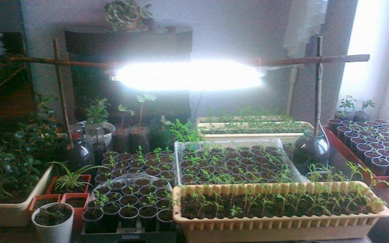 Как сделать рассаду в домашних условиях 520