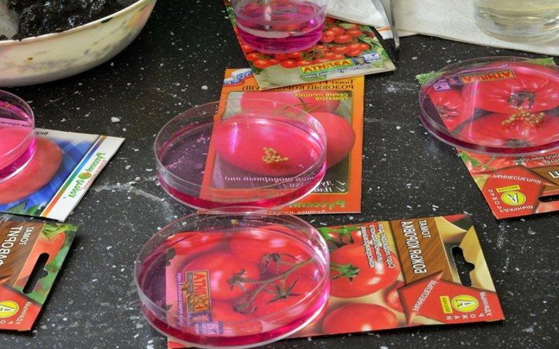 Готовим семена помидоров к посадке: сортировка и проверка