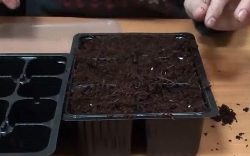 Подготовка семян помидоров к посадке на рассаду: замачивание