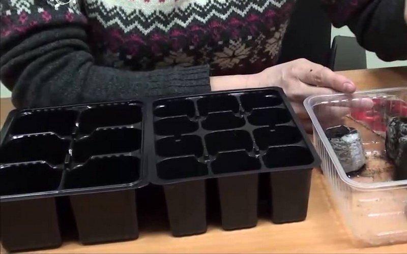 Правильная подготовка для выращивания рассады помидоров дома