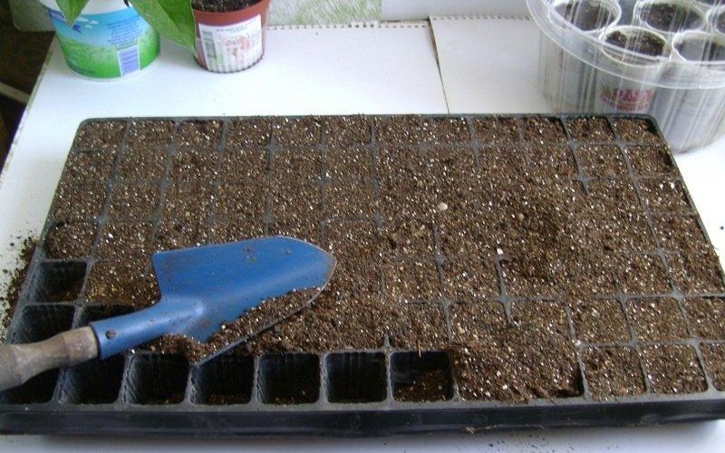 Как правильно вырастить рассаду огурцов: удобряем грунт