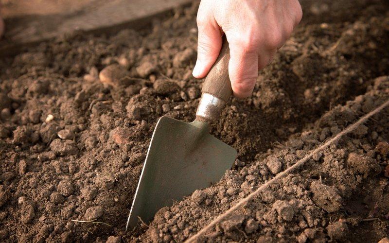 Сажаем огурцы в открытый грунт: подготовка грядок