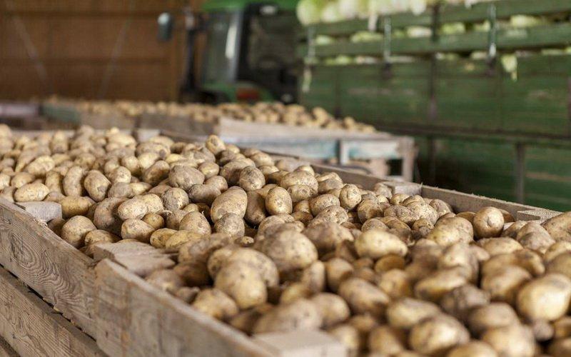 Технология хранения овощей: как хранить дома картофель