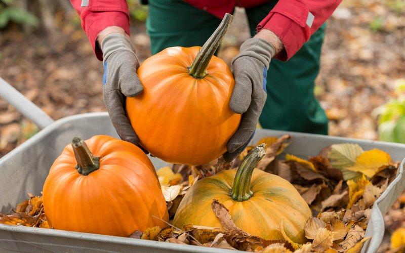 Как лучше сохранить овощи: закладка на хранение тыкв, кабачков и сельдерея