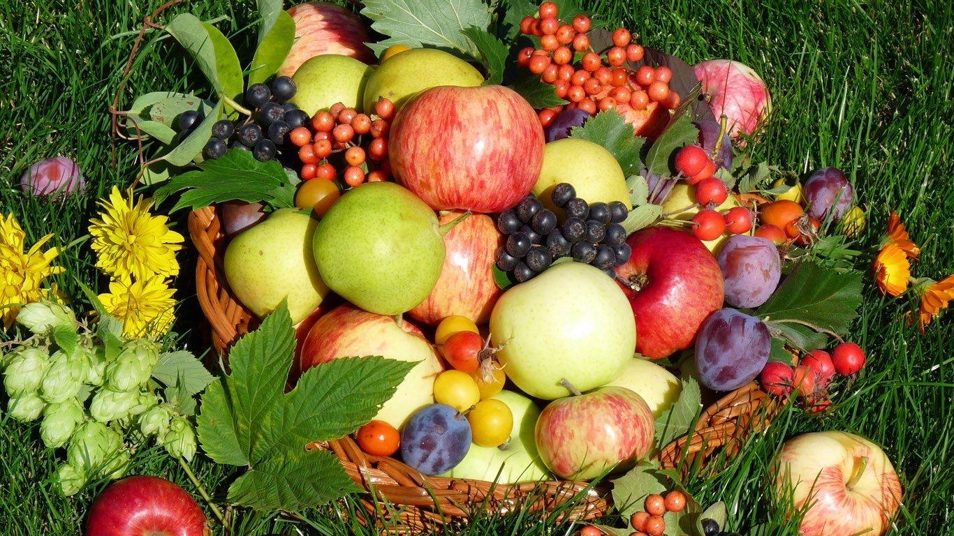 Условия и сроки хранения свежих овощей, фруктов и ягод