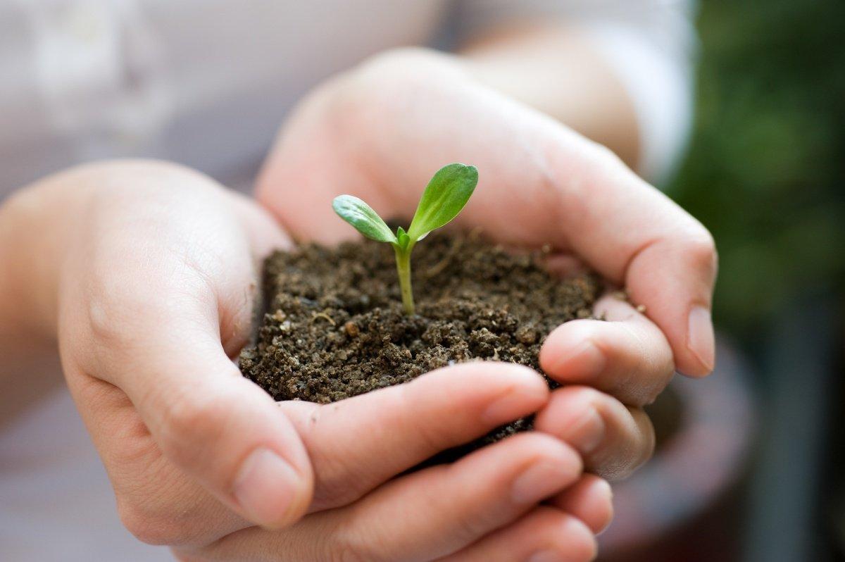 Подготовка грунта для рассады овощей своими руками
