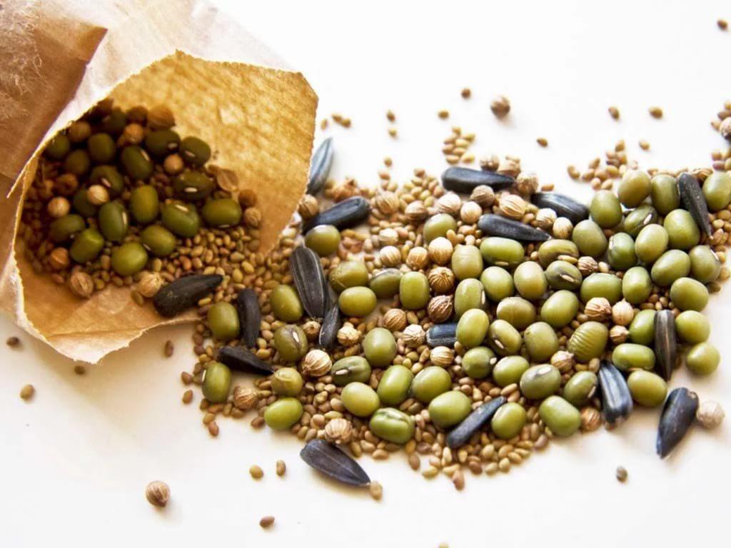 Подготовка семян к посеву на рассаду и в открытый грунт