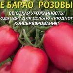 Помидоры Сильвестр F1 характеристика и описание сорта как вырастить с фото