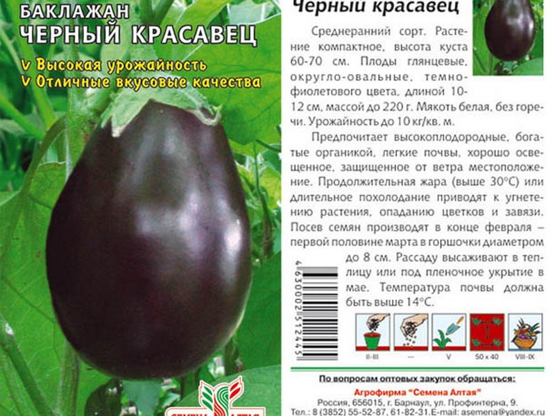 Семена баклажана «Черный красавец» на фото