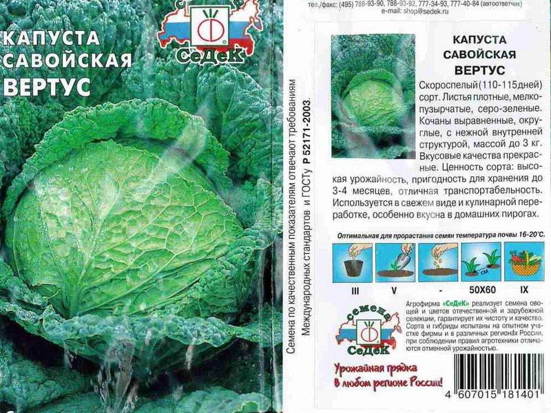 Семена савойской капусты «Вертус» на фото