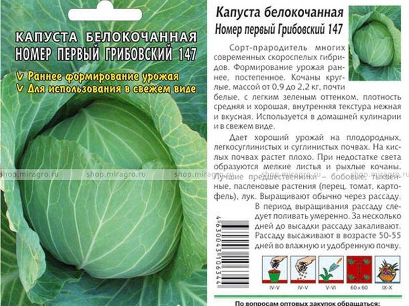 Семена белокочанной капусты «Грибовский» 147 F1 на фото