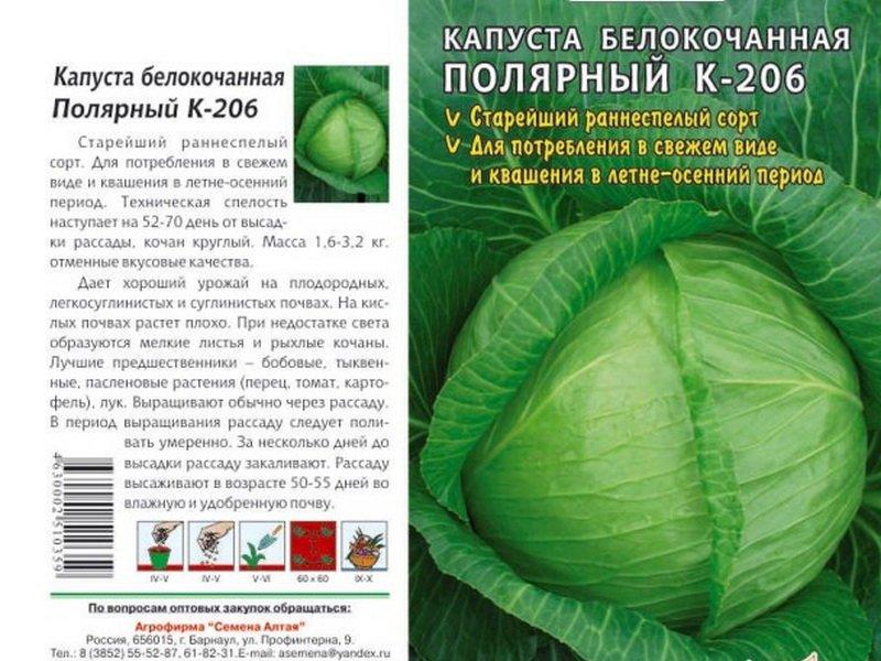 Семена белокочанной капусты «Полярный К 206» F1 на фото