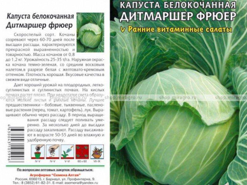 Семена белокочанной капусты «Дитмаршер фрюер» на фото