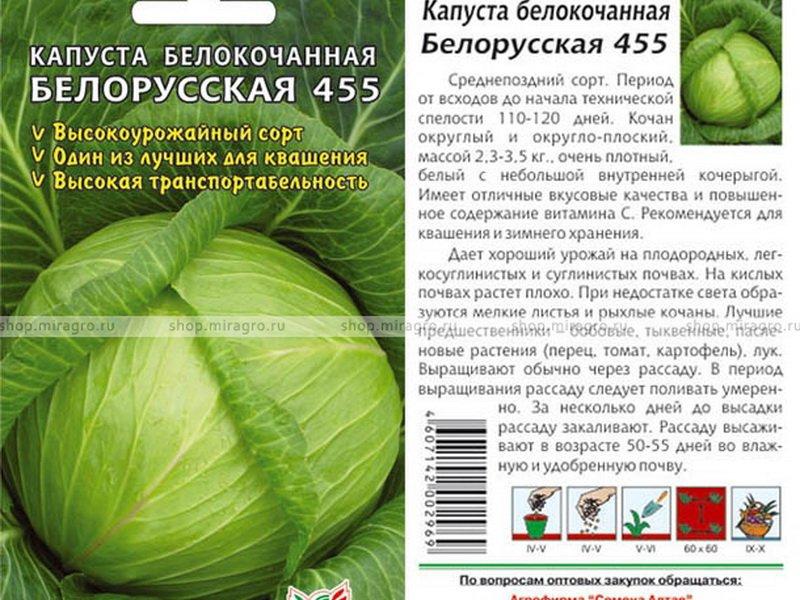 Семена белокочанной капусты «Белорусская 455» на фото