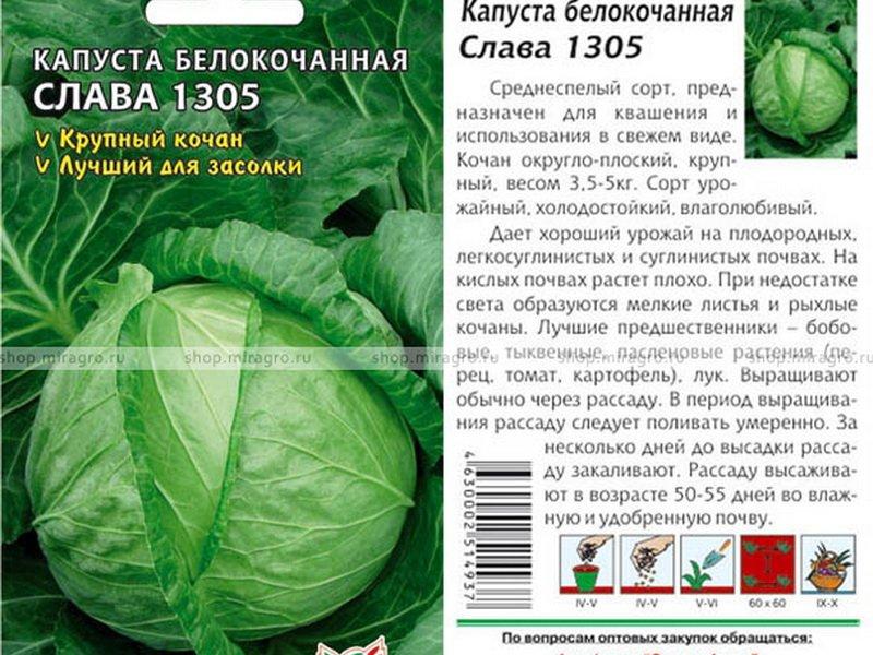 Семена белокочанной капусты «Слава 1305» на фото