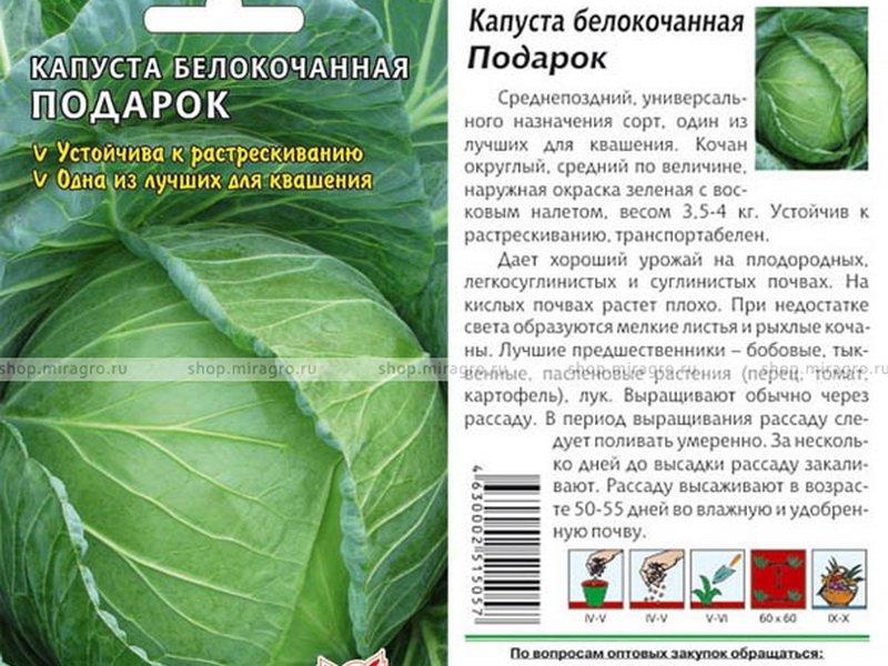 Семена белокочанной капусты «Подарок» на фото
