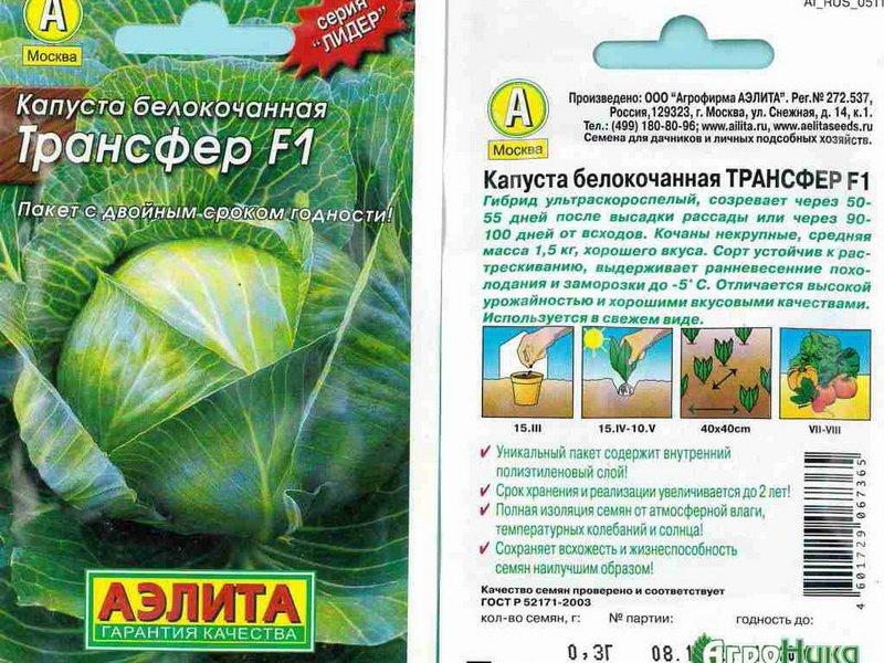 Семена белокочанной капусты «Трансфер» F1 на фото