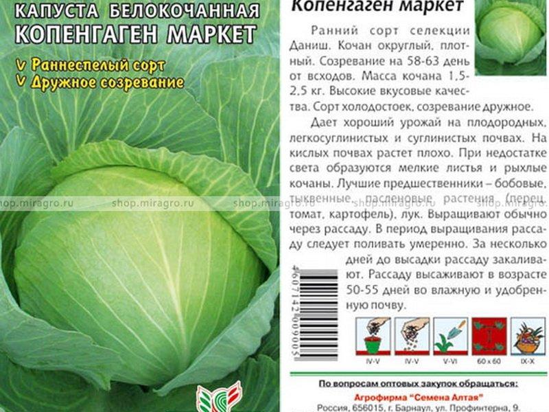 Семена белокочанной капусты «Копенгаген маркет» на фото