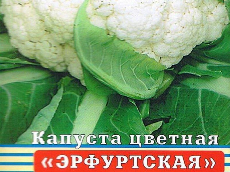 Семена цветной капусты «Эрфуртская» на фото