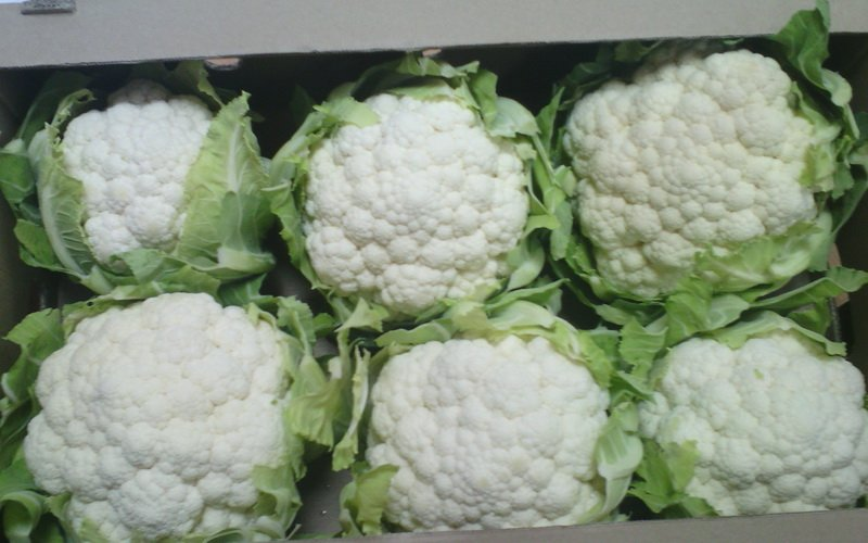 Лучшие сорта цветной капусты для открытого грунта и их фото фото