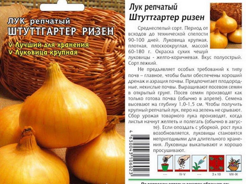 Семена репчатого лука «Штутгартер Ризен» на фото