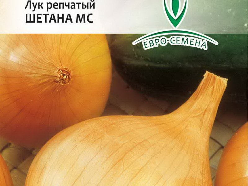 Семена репчатого лука «Шетана» на фото