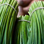 Сорта лука: виды, какие бывают с названиями и описанием с фото