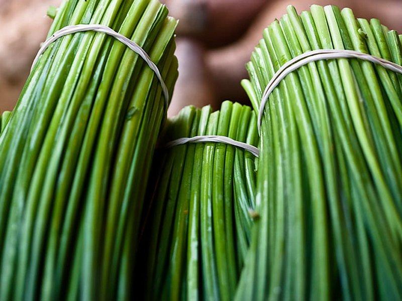«Альбион» — среднеспелый, зимостойкий сорт шнитт-лука на фото