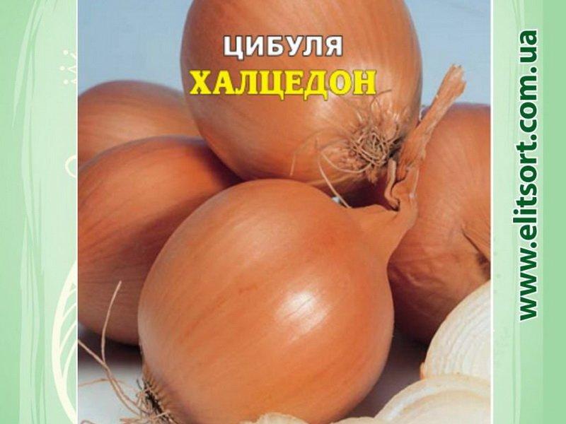 Семена репчатого лука «Халцедон» на фото