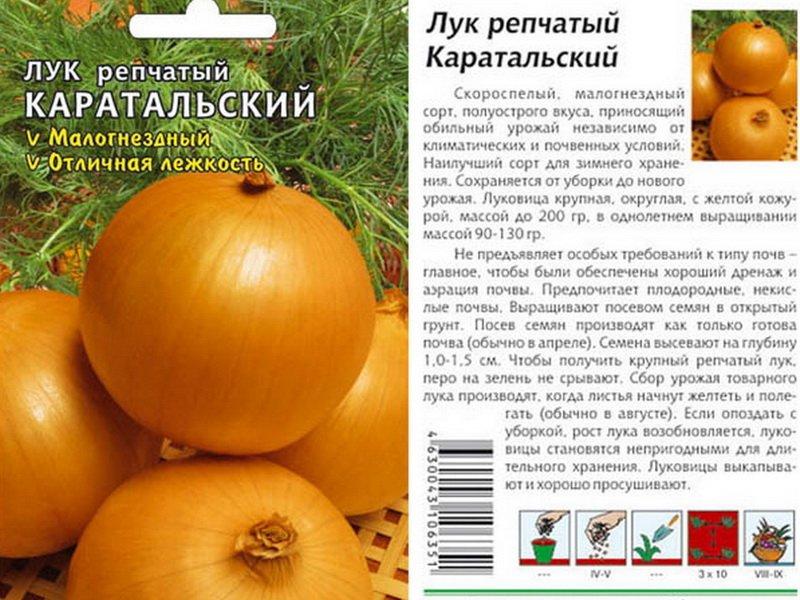 Семена репчатого лука «Каратальский» на фото