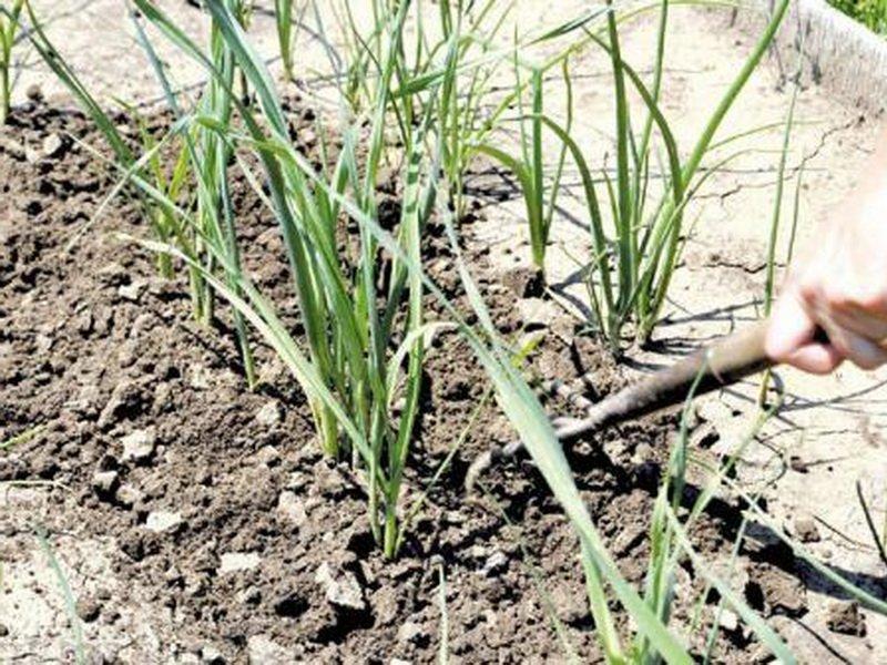 На фото почву отгребают