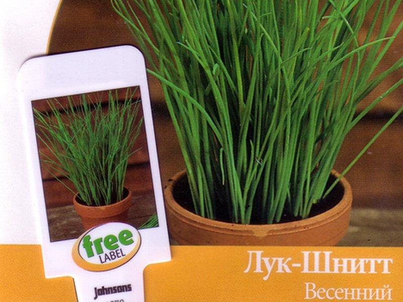 Семена Шнитт-лука «Весенний» на фото
