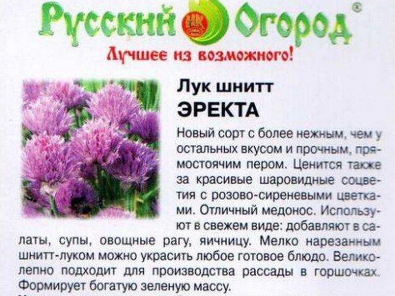 Семена Шнитт-лука «Эректа» на фото