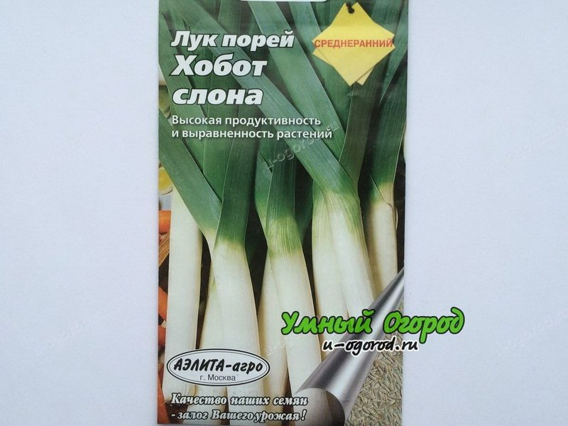 Семена лука-порея«Хобот слона» на фото