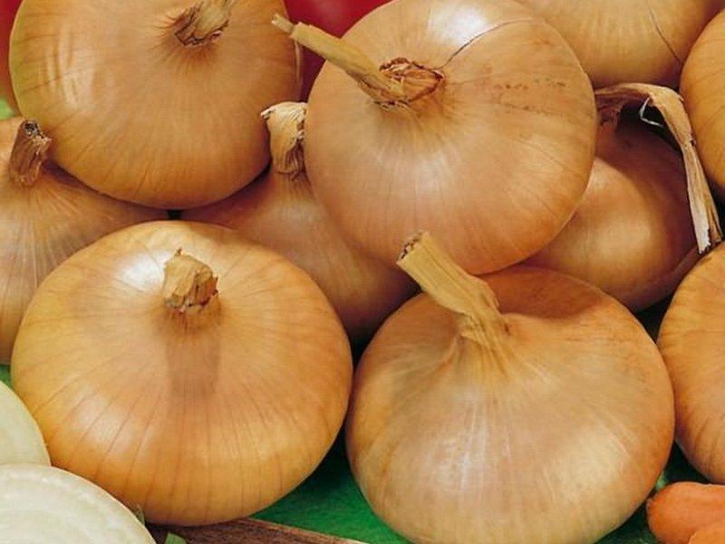 Луковицы «Мячковский местный» округлые, плоские, среднеплотные на фото