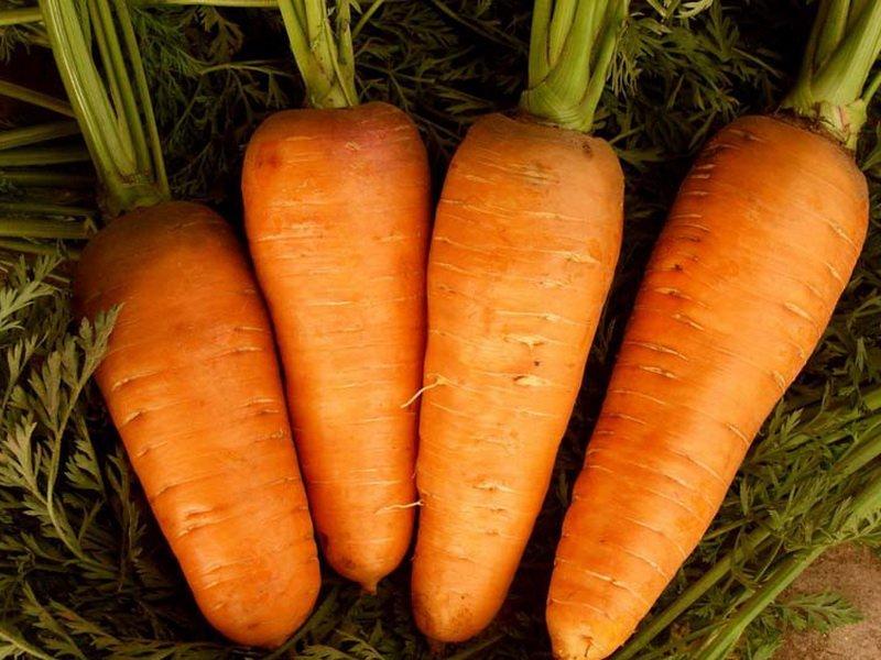 Морковь сорт «Болтекс» на фото