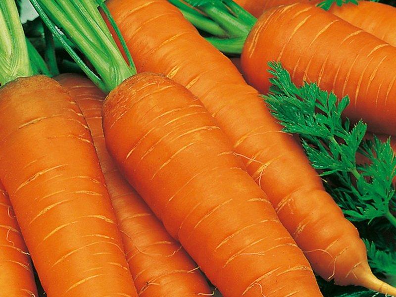 Морковь сорт «Витаминная 6» на фото