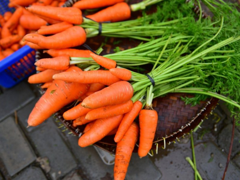 Морковь сорт «Московская зимняя А-515» на фото