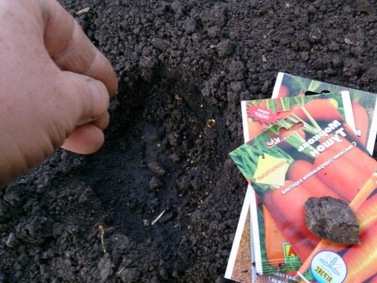 Как и когда сажать морковь семенами в  141
