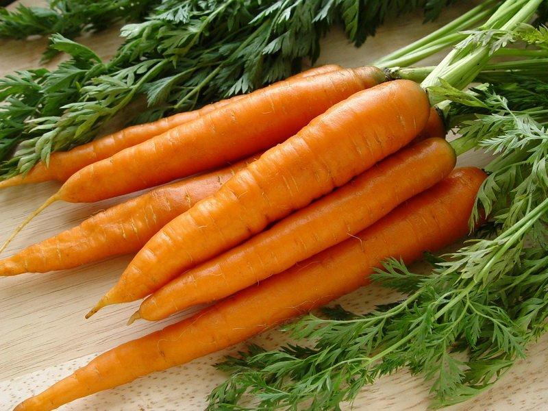 Морковь сорт «Флакке» на фото