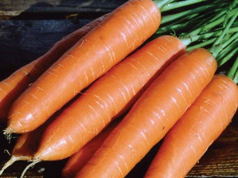 Морковь сорт «Роте Ризен» на фото
