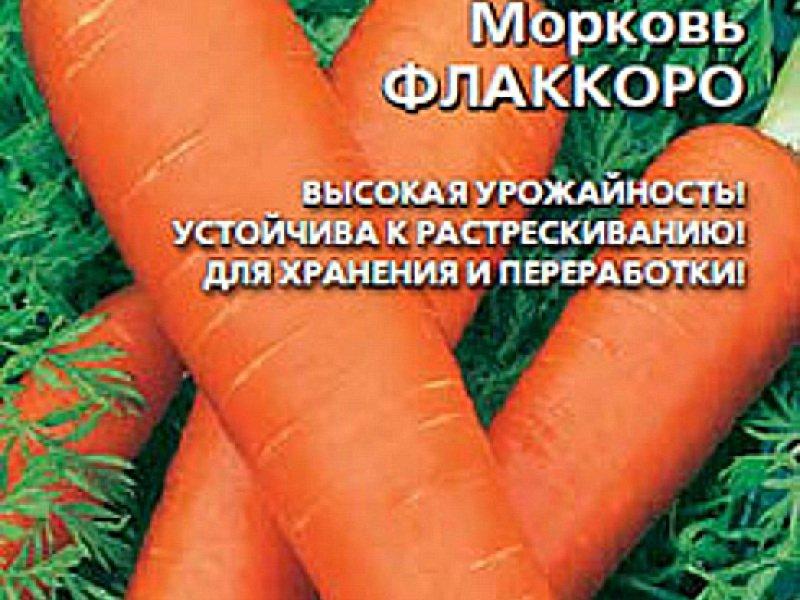 Семена моркови «Флаккоро» на фото