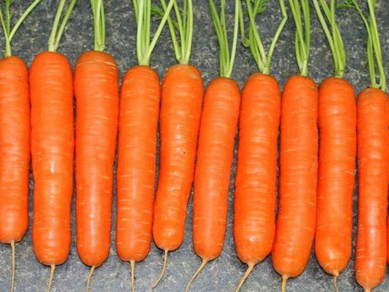 Морковь сорт «Королева осени» на фото
