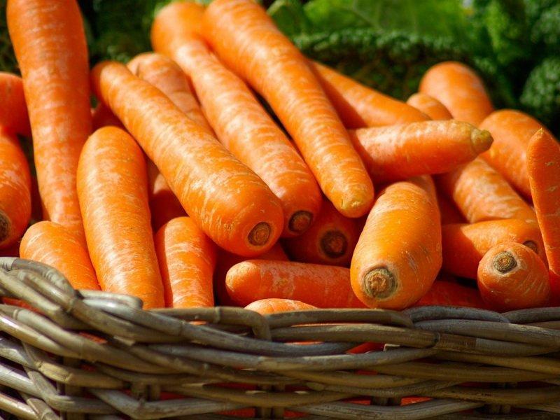 Урожй моркови на фото