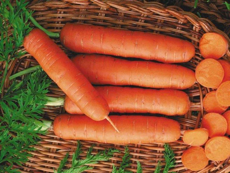 Морковь сорт «Чукотский стиль» F1 на фото