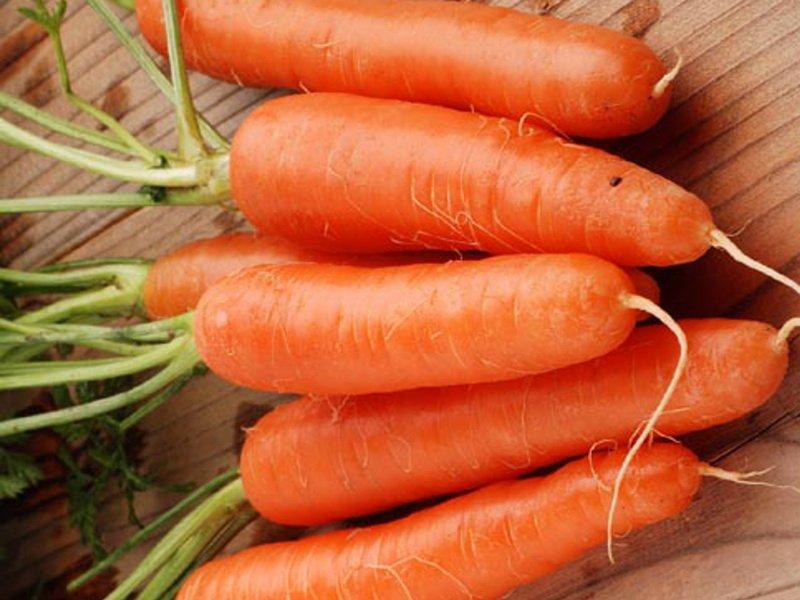 Морковь сорт «Пралине» на фото