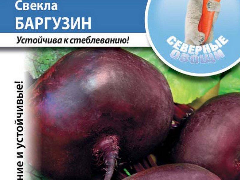 Семена свеклы «Баргузин» на фото