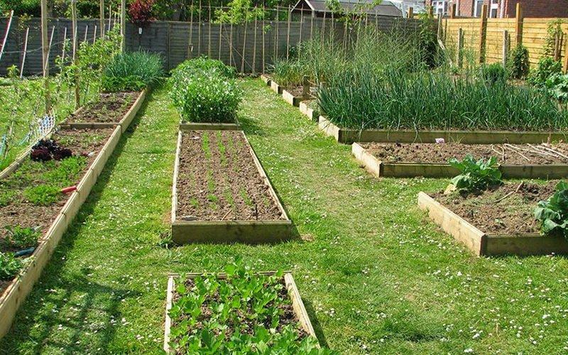 Правильная подготовка почвы под закладку сада