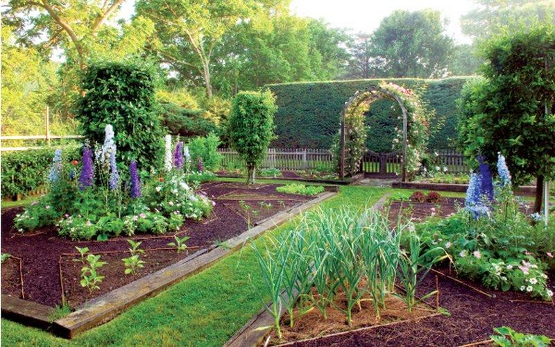Как правильно разбить сад на дачном участке (с фото) фото