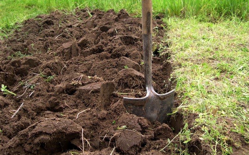 Обработка почвы в саду по системе черного пара